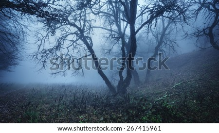 Mysterious dark autumn forest in fog with leaves, trees and branches . Autumn morning in Crimea (Mountain Ai-Petry)