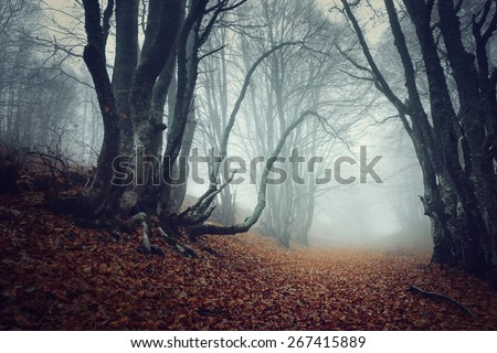 Mysterious dark autumn forest in fog with orange leaves, trees and branches. Autumn morning in Crimea (Mountain Ai-Petry) - stock photo