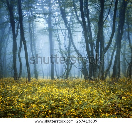 Mysterious dark forest in fog with green leaves and yellow flowers. Beautiful spring morning in Crimea. Magical atmosphere. Fairytale - stock photo