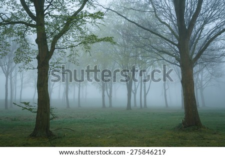 Mysterious, dark mood in the woods on a foggy, spring day. - stock photo