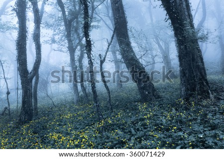 Mysterious dark old forest in fog with flowers. Spring morning in Crimea. Magical atmosphere. Beautiful natural landscape. Vintage style
