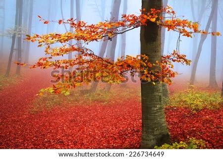 Mysterious fairytale foggy forest during autumn - stock photo