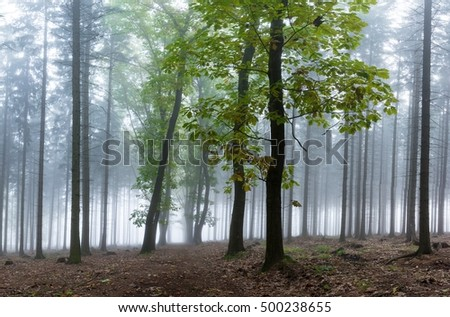 Mysterious fog among the trees in the autumn forest