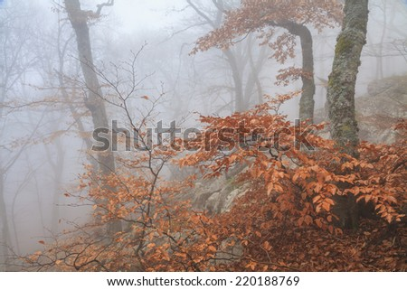 Mysterious foggy autumn forest  - stock photo