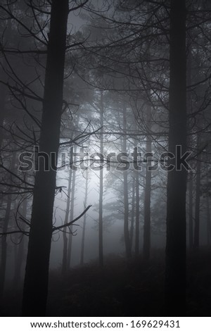 Mysterious foggy forest from the north of Portugal at dusk - stock photo