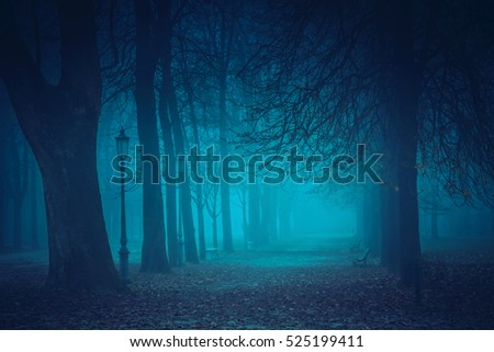 Mysterious foggy park in the night.