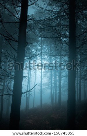 Mysterious foggy pine forest at dusk - stock photo