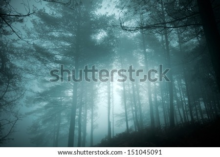 Mysterious foggy woods at dusk - stock photo