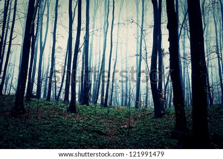 Mysterious forest - stock photo