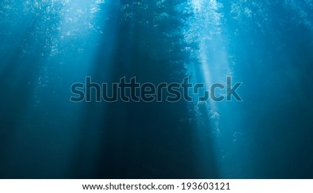 Mysterious forest and rays of light in the fog - stock photo