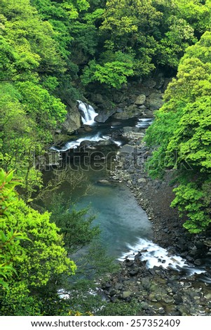 Mysterious forest and waterfall  - stock photo
