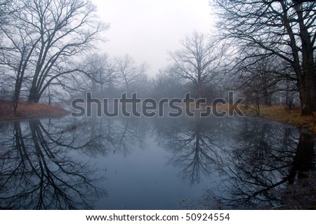 Mysterious forest at foggy morning in swamp area - stock photo
