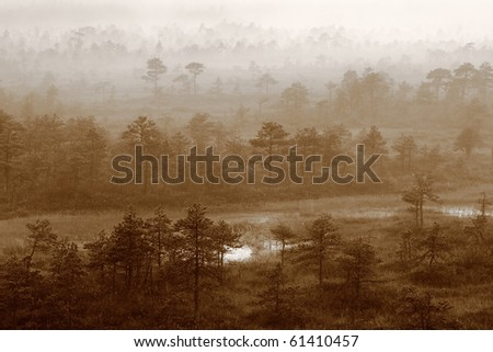 Mysterious forest at foggy morning in swamp area. - stock photo