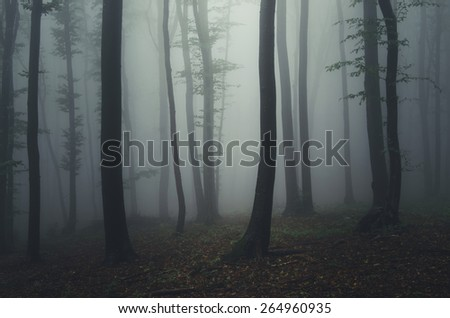 mysterious forest at night - stock photo