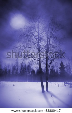 Mysterious forest. Full moon. - stock photo