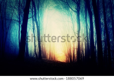 Mysterious forest in fog - stock photo