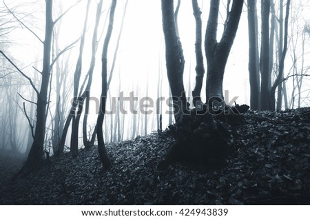 mysterious forest in fog