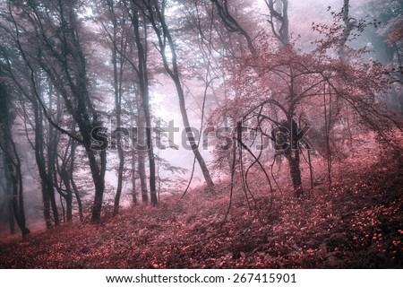 Mysterious forest in fog with pink leaves and red flowers. Spring morning in Crimea. Magical atmosphere. Fairytale - stock photo