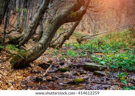 Mysterious forest in wet weather sunlit. Dramatic scene and picturesque picture. Location place Carpathian National Park, Ukraine, Europe. Beauty world. Soft filter. Warm toning effect. - stock photo