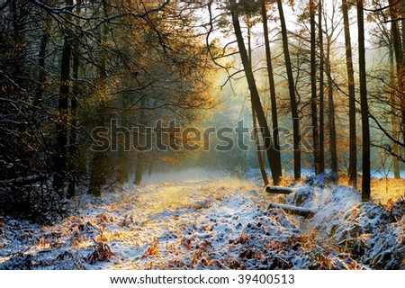 Mysterious forest in winter