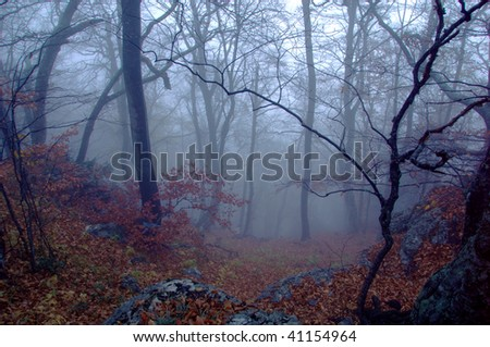 Mysterious forest with a view of coming fog - stock photo