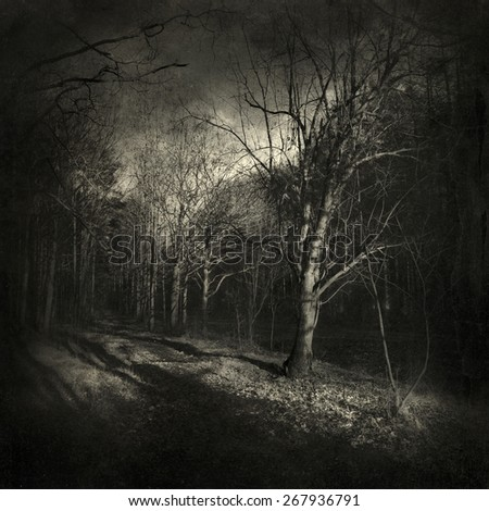 Mysterious forest, with a vintage/painting effect. - stock photo