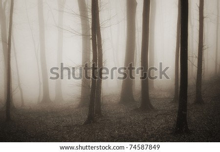 mysterious forest with fog in sepia - stock photo