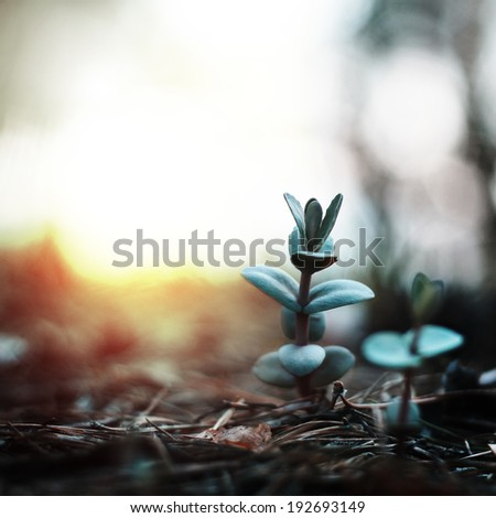 mysterious green plant on background of the dawn - stock photo