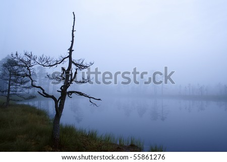 Mysterious lakeside at foggy autumn morning - stock photo