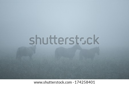 mysterious landscape three horses in thick fog on a meadow in summer