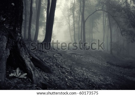 mysterious looking forest on a misty evening - stock photo