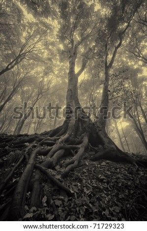 mysterious looking tree with spread roots in a dark misty forest - stock photo