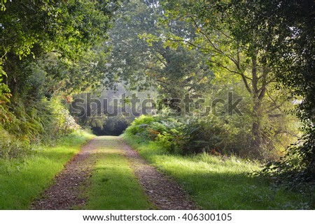 Mysterious natural tree arch walkway in a green deciduous forest - stock photo