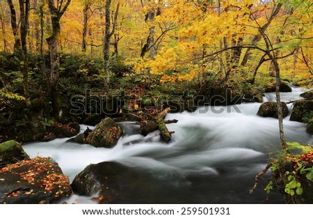 Mysterious Oirase Stream in the autumn forest, Aomori Japan - stock photo