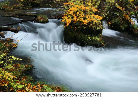 Mysterious Oirase Stream  in the autumn forest of a national park in Aomori Japan - stock photo
