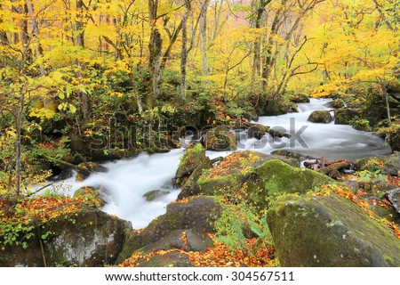 Mysterious Oirase Stream in the autumn forest of Towada Hachimantai National Park in Aomori Japan~ - stock photo