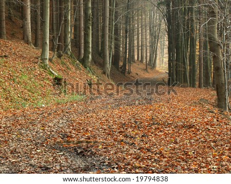 Mysterious path through the forrest - stock photo