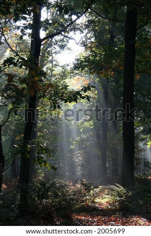 mysterious sunlight in a dutch forest