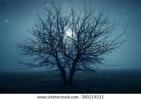 Mysterious tree in a middle of a field under the starry night sky. - stock photo