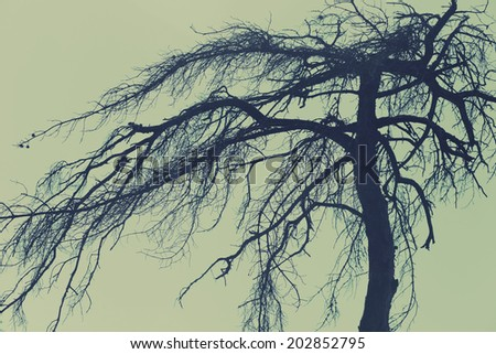 Mysterious tree, scary forest - stock photo