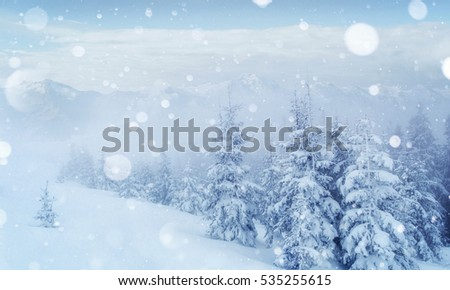 Mysterious winter landscape majestic mountains in the winter. Nice thick fog. Magical winter snow covered tree. Photo cards. light effect bokeh, soft filter. Carpathian. Ukraine. Europe