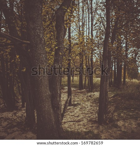 mystery forest vintage background - stock photo