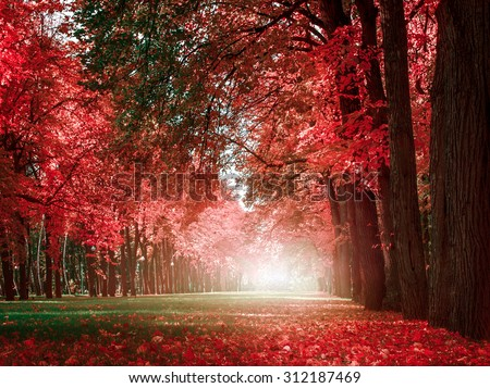 mystery romantic alley in a park with colorful trees, autumn landscape, natural background - stock photo