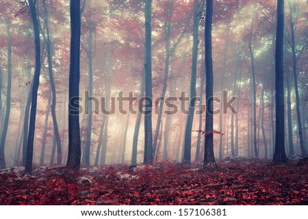 Mystic autumn red beech forest. - stock photo