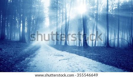 Mystic blue sunny light forest road and lovely sunbeams. - stock photo