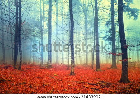Mystic colored autumn foggy forest scene. Filter color effect used. - stock photo