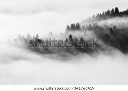 Mystic foggy forest - stock photo