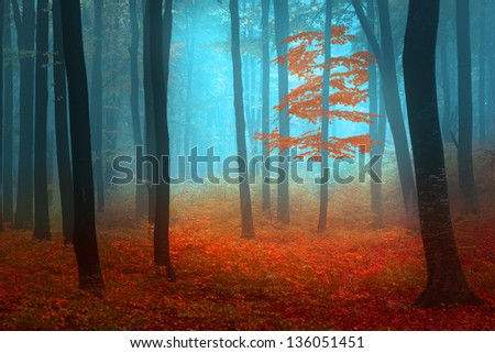 Mystic foggy forest during autumn - stock photo