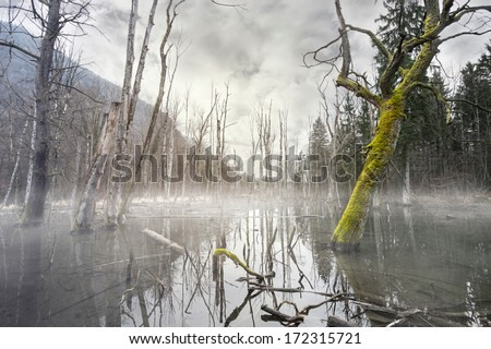 Mystic foggy swamp with dead trees - stock photo