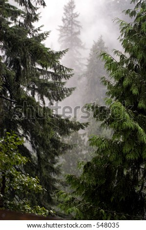 Mystic forest - stock photo